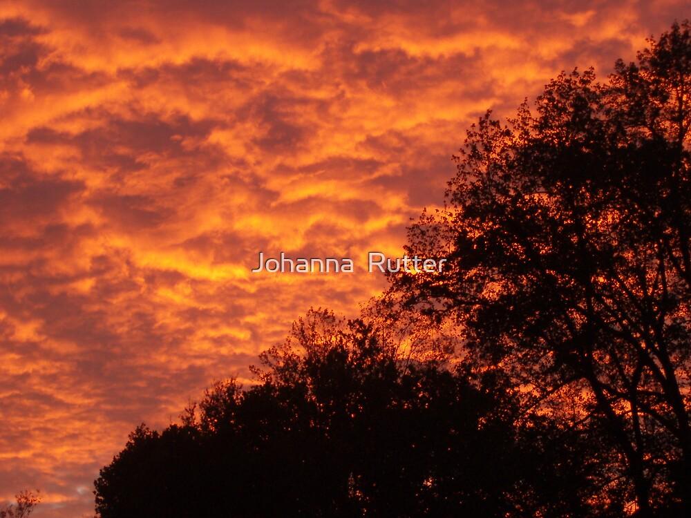 Silhoutte Sunset by Johanna  Rutter