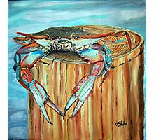 Blue Crab on Piling Photographic Print