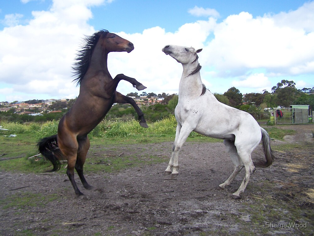 Horse play  by Sharna Wood