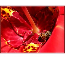 Bees Paradise Photographic Print