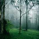 Spring Mist by Sue Wickham