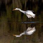 Great Egret ~ Scruffy  by Robert Elliott