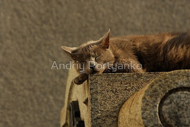 Daydream by Andriy Portyanko