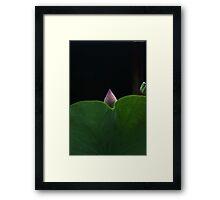 New Born Lotus Framed Print