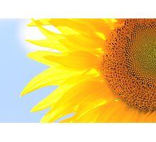September Sunflower Photographic Print
