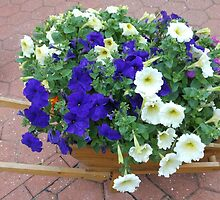 Wheelbarrow Floral Display by Kathryn Jones