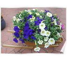 Wheelbarrow Floral Display Poster
