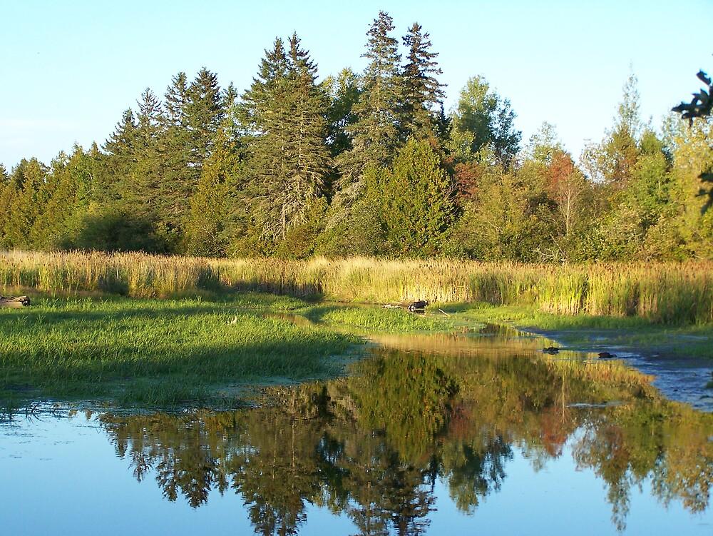 Autumn Reflected 2 by Gene Cyr