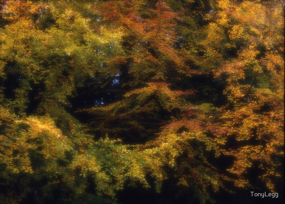 Autumn Leaves by TonyLegg