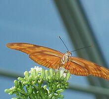Butterfly by Cr1st1n4l