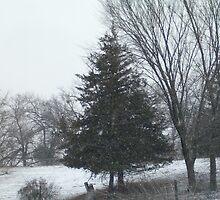 tree in winter by KassieStuefen