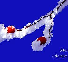 christmas rosehip by Cornelia Togea