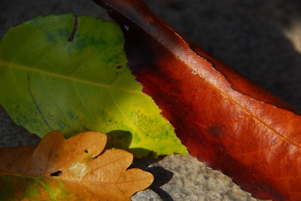 Autumn Leaves by lucio della ratta