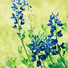 Bluebonnet by Suni Pruett