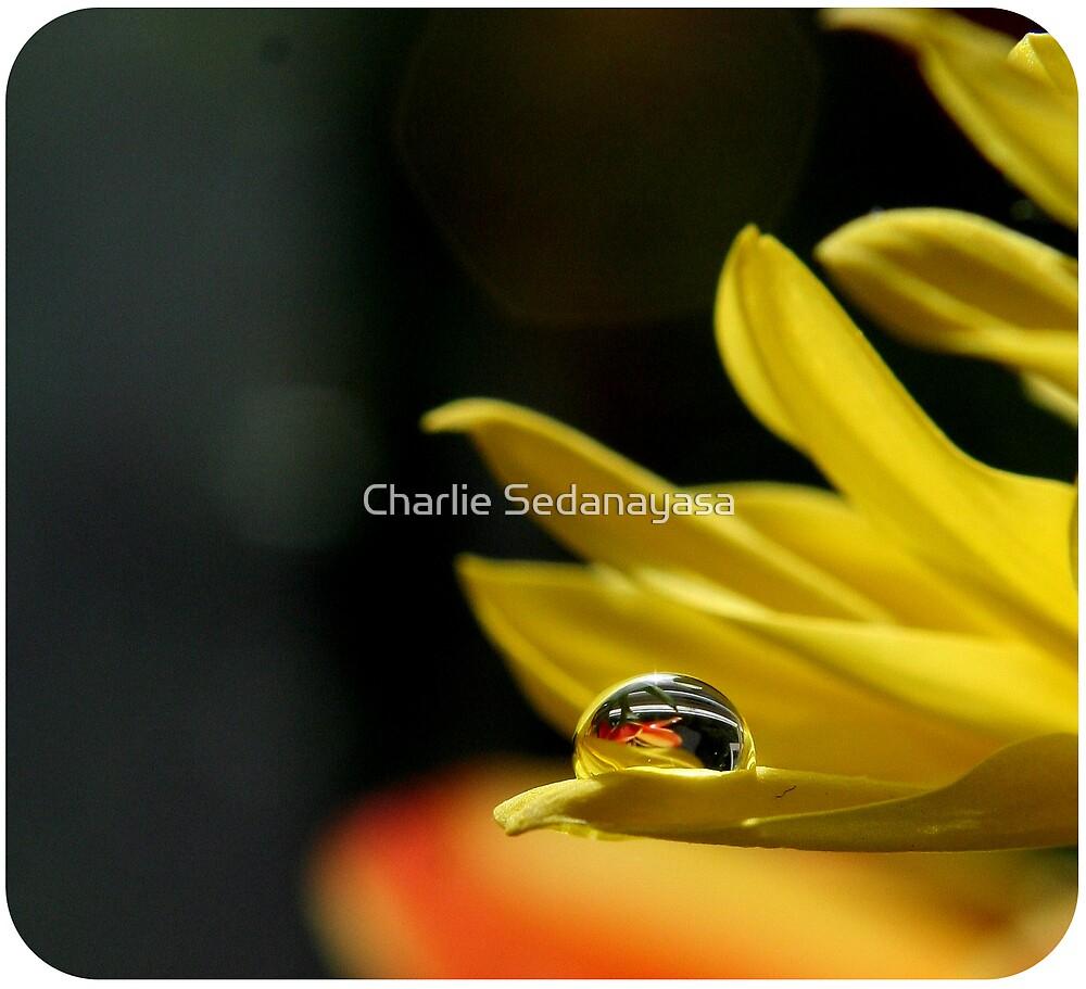 mellow yellow by Charlie Sedanayasa
