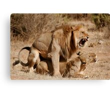 Lion Love Canvas Print