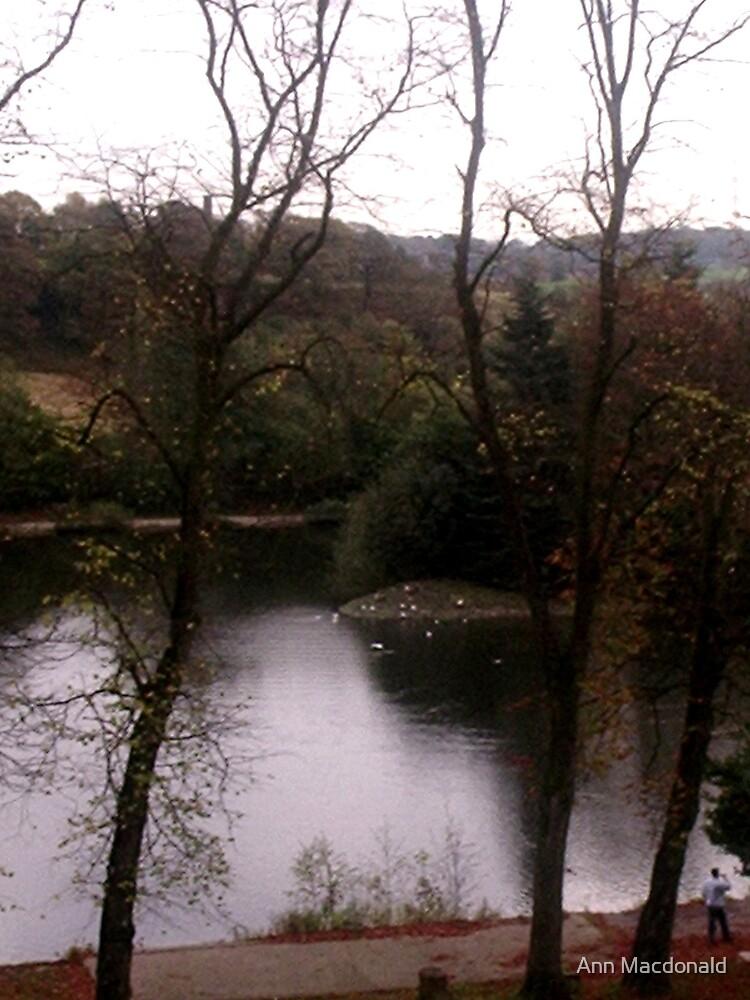 lake view by Ann Macdonald
