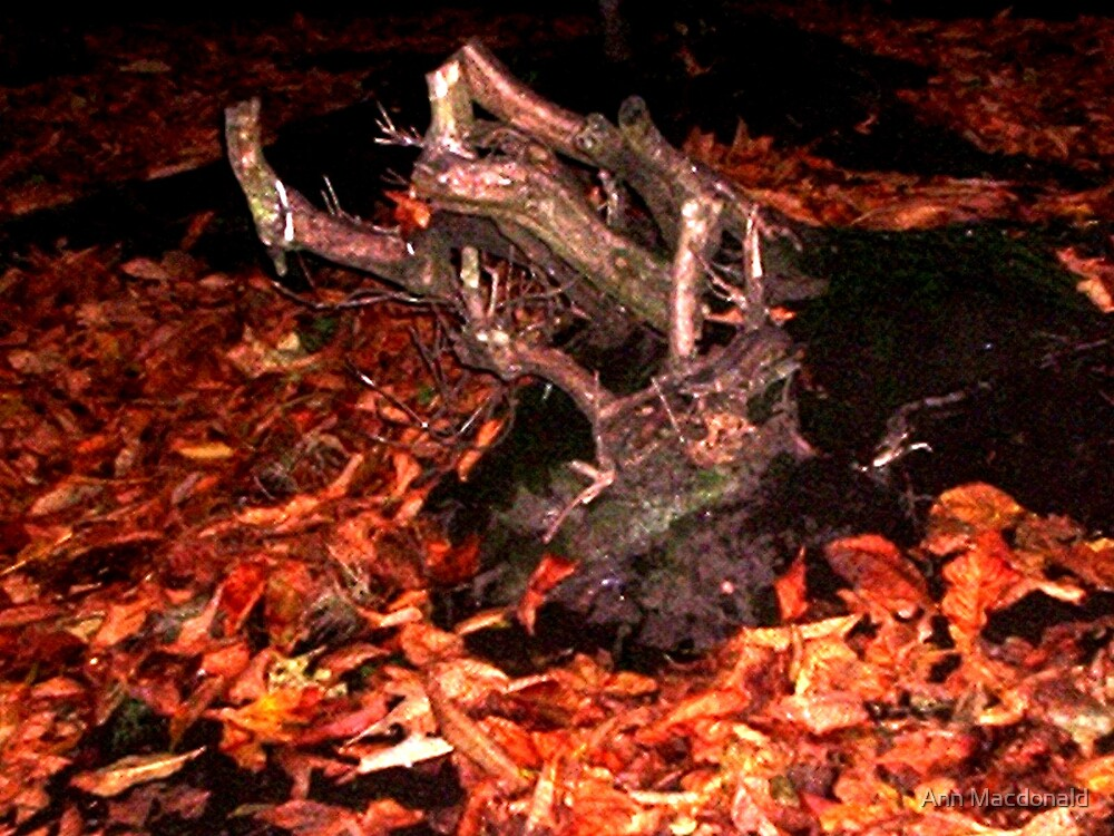 Autumn log by Ann Macdonald