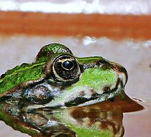 """Chives""  The Star Frog summer in all its forms   13 (c)(h) by Olao-Olavia / Okaio Créations fz 1000 by okaio caillaud olivier"