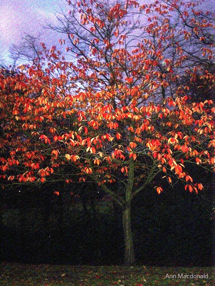 Autumn leaves by Ann Macdonald