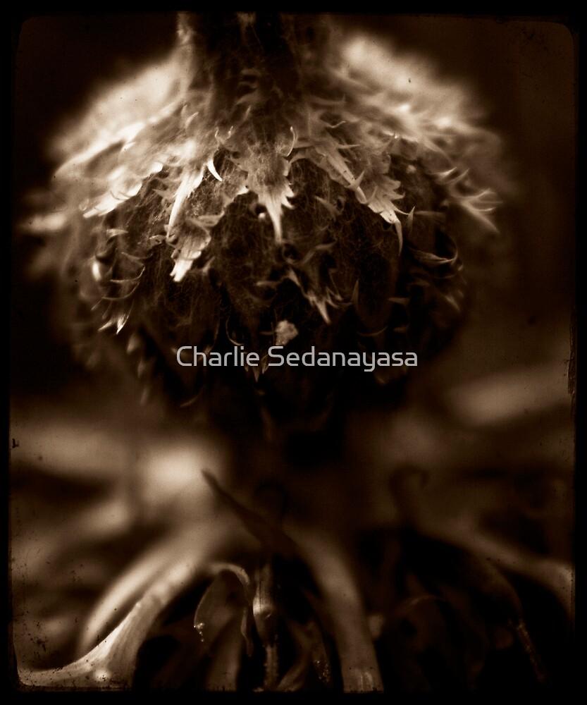 upturned by Charlie Sedanayasa