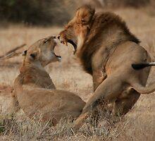 Roar Passion by Steve Bulford