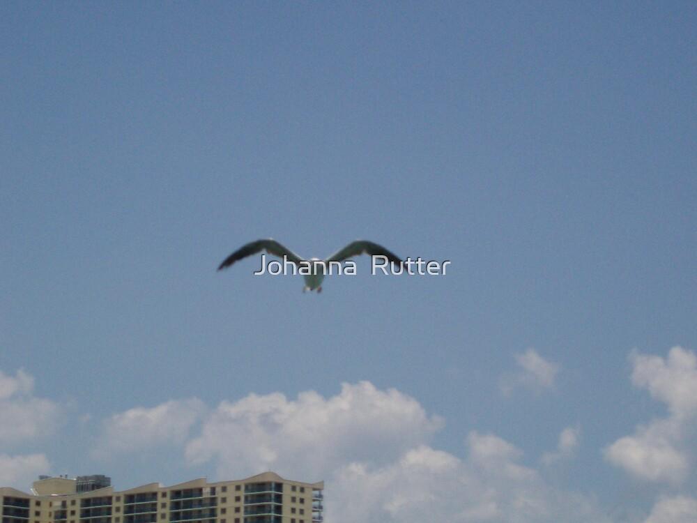 Myrtle beach Seagull by Johanna  Rutter