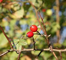 autumn rosehip bush by NJAPHOTOGRAPHY