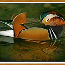 Sleepy Duck by Jan Cartwright