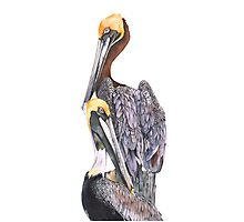 Pelicans Photographic Print
