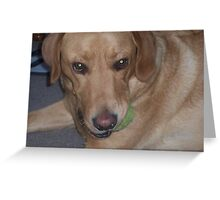 gypsy and the green eyed monster when it comes to his ball. Greeting Card