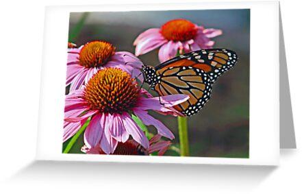 Monarch Butterfly by Judith Winde
