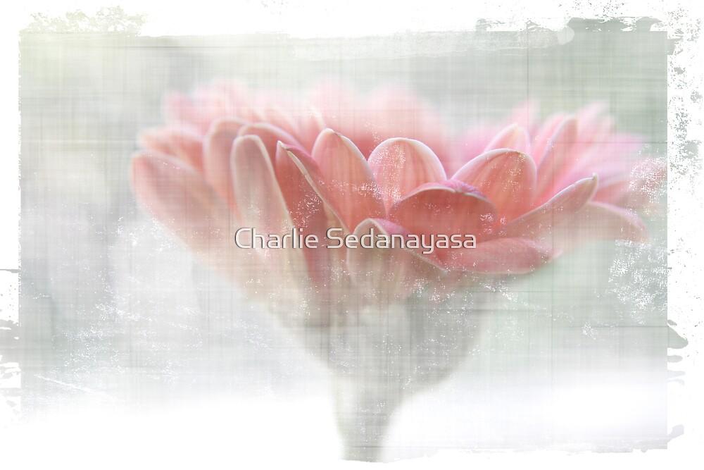 ~` by Charlie Sedanayasa