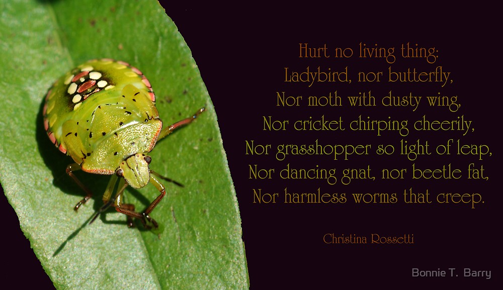 Hurt no living thing . . . by Bonnie T.  Barry