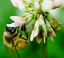 Busy Bee by Ben Shaw