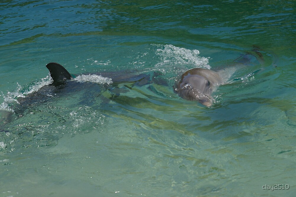 Dolphins by clay2510