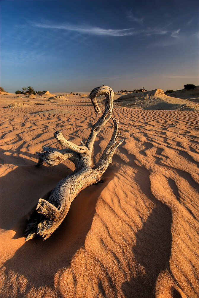 Desert, Dunes and Wood by Robert Mullner