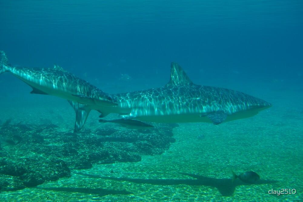 Shark #2 by clay2510