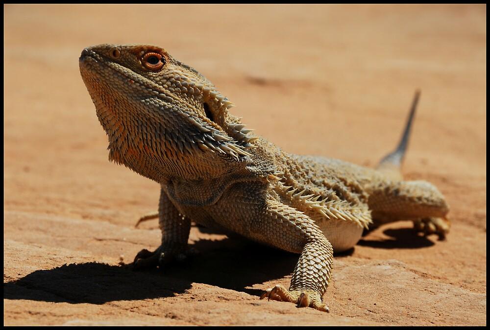 Desert Dragon by Robert Mullner