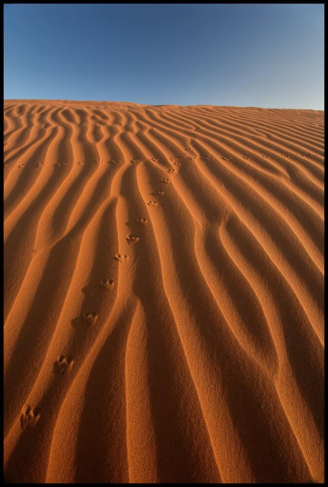 Tracks by Robert Mullner