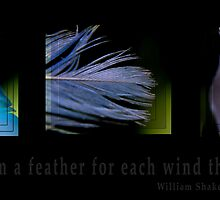 Feathers by Michelle Shoosmith