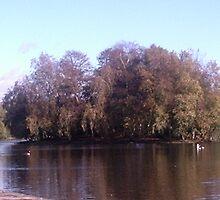 Island on the lake by Ann Macdonald