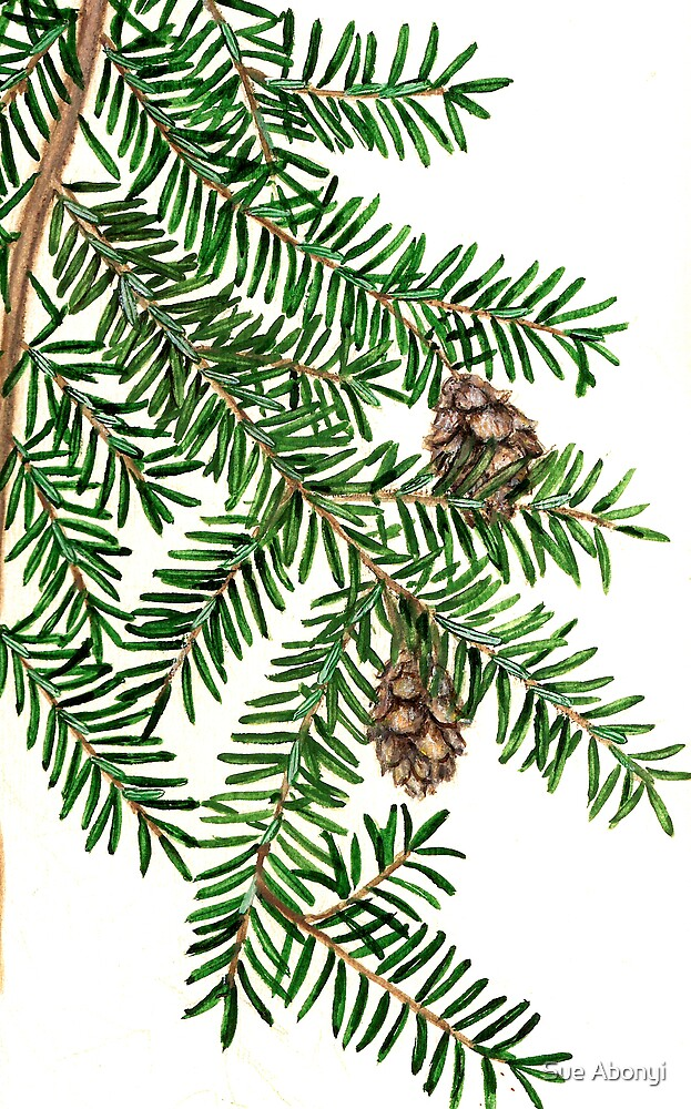 Canadian Hemlock  - Tsuga canadensis by Sue Abonyi