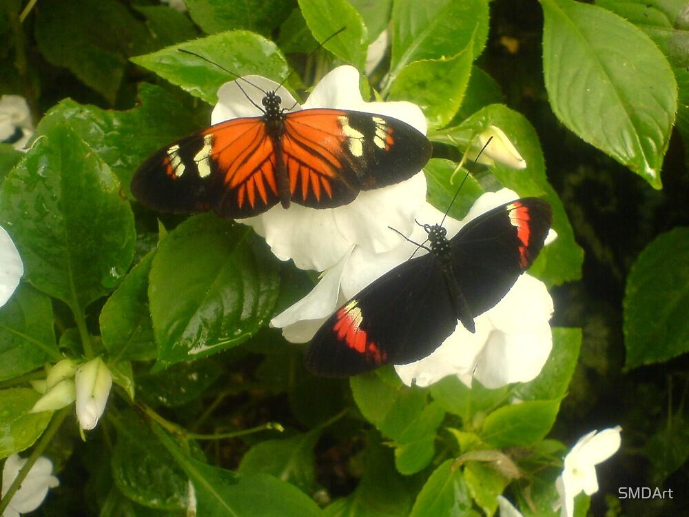 Buttefly 2 by SMDArt