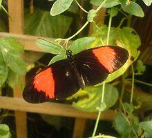 Butterfly 3 by SMDArt