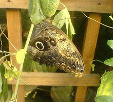 Butterfly 4 by SMDArt