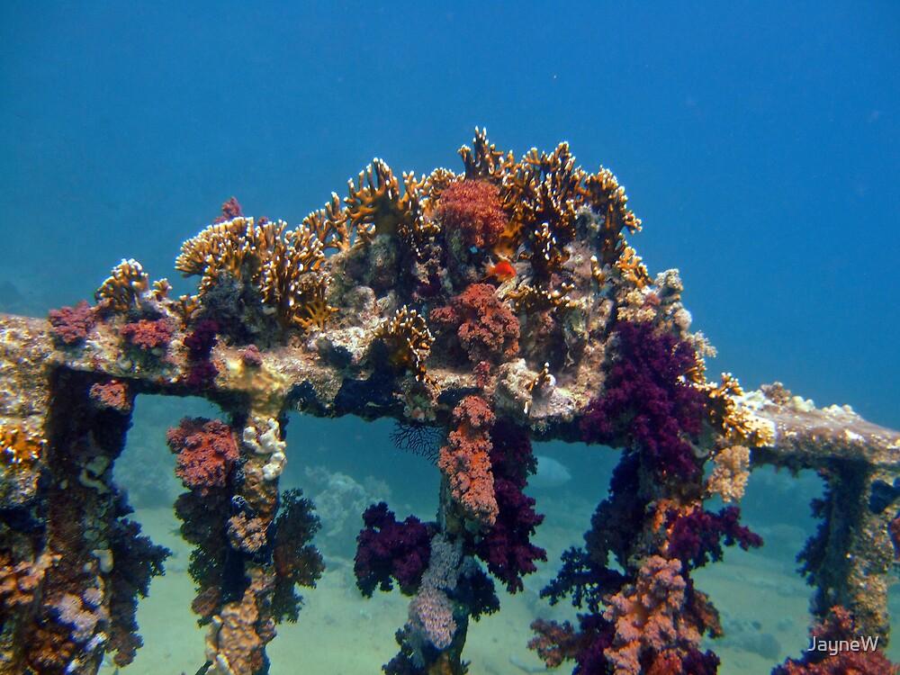 jolanda reef by JayneW