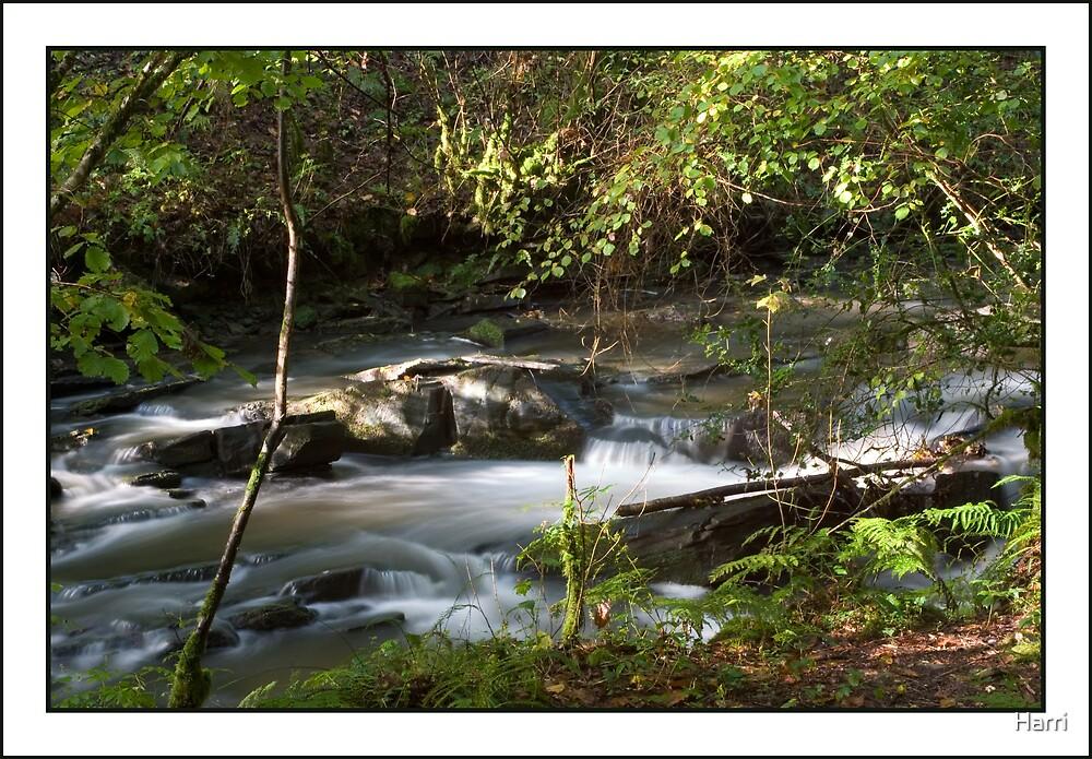 Woodland Stream by Harri