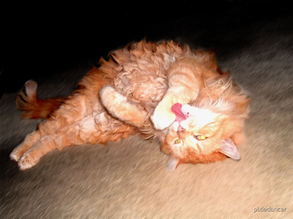 Ginger Cat Rolling by pixiedancer
