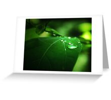 The Nature of Tranquility Greeting Card